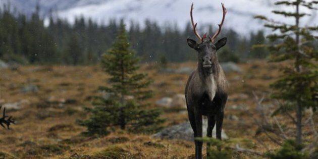 La sixième grande extinction animale est commencée, selon une