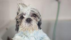 D'adorables clichés d'animaux prenant leur bain