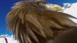 Les images magnifiques des caméras embarquées sur des animaux