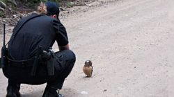 Le face-à-face adorable de cette petite chouette avec la police