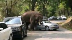 En peine d'amour, un éléphant détruit 19 voitures