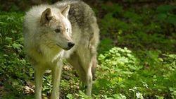Le Parc Omega: incursion au cœur de la vie de nos animaux