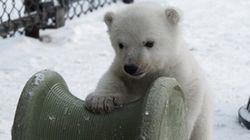 Ce bébé ours polaire joue pour la première fois dans la neige