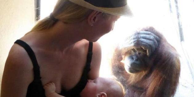 Cette femelle orang-outan est demeurée bouche bée en voyant une mère donner le