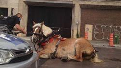 Les chevaux ont-ils leur place à Montréal?