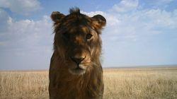Les photos incroyables prises par 225 caméras automatiques du Serengeti