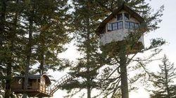 Foster Huntington, l'homme qui a tout quitté pour se construire une cabane dans les arbres