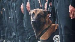 #Jesuischien: En l'honneur d'une chienne d'assaut tuée à