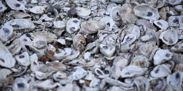 Oyster shells sit in a pile after being shucked at W.E. Kellum Seafood Inc. in Weems, Virginia, U.S.,...