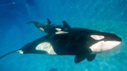SeaWorld annule son attraction vedette avec les