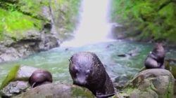 Cette cascade est le refuge de bébés phoques