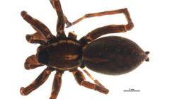 La découverte d'une nouvelle espèce d'araignée surprend au parc