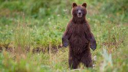 Le Parc national de Jasper recherche des «ramasseurs d'excréments»