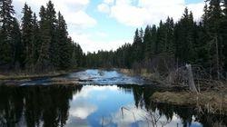 Biodiversité: le Canada à la traîne