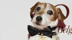 Uggie, le petit chien de «The Artist», est mort