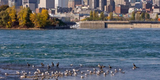 Montreal skyline and Saint Lawrence River in