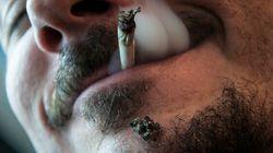 Les experts du cannabis se disent prêts à la