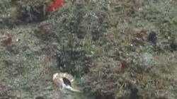 Vous ne devinerez jamais où se cache la pieuvre dans cette vidéo