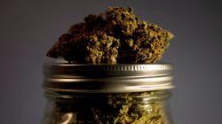 Rappel de marijuana par Santé Canada: elle était trop