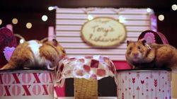 Vous craquerez pour ces petits hamsters en rendez-vous galant