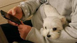 VIDÉO: le nouveau chandail japonais pour porter son animal contre