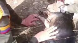 Ce policier risque sa vie pour sauver un chien emporté par la rivière