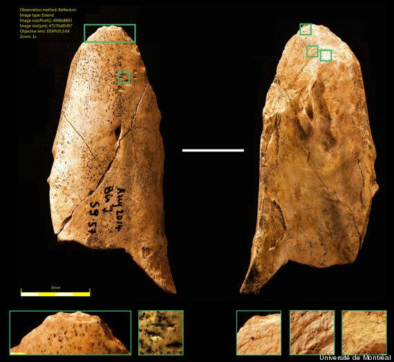 La découverte de cet outil préhistorique remet en cause l'évolution
