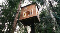 Cette maison dans les arbres est