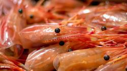 Menace contre la crevette