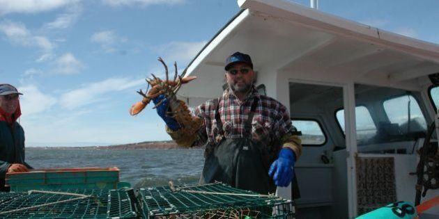 Écocertifié, le homard gaspésien est plus près que jamais de la