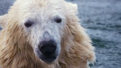 Réchauffement climatique: une espèce animale sur six
