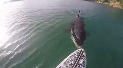 Une rencontre inattendue avec une orque en stand-up