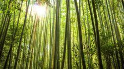 Produits écologiques: le papier sans