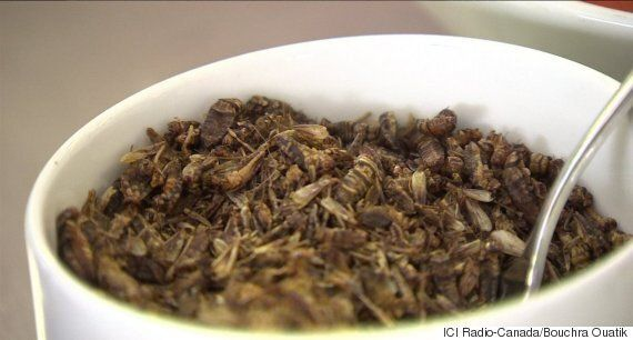 Des insectes au menu de la cafétéria de l'Université de