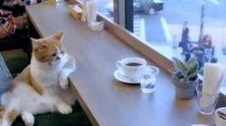 À quoi rêve ce chat accoudé dans un