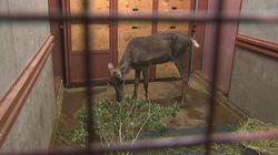 Le Zoo sauvage de Saint-Félicien en