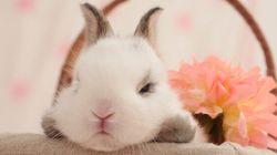 16 lapins grincheux qui ne fêtent plus