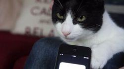 Voici le chat le plus bruyant du