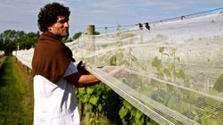 Les petits viticulteurs argentins crient haro sur l'agriculture