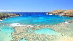 L'acidification des océans responsable de la plus grande extinction