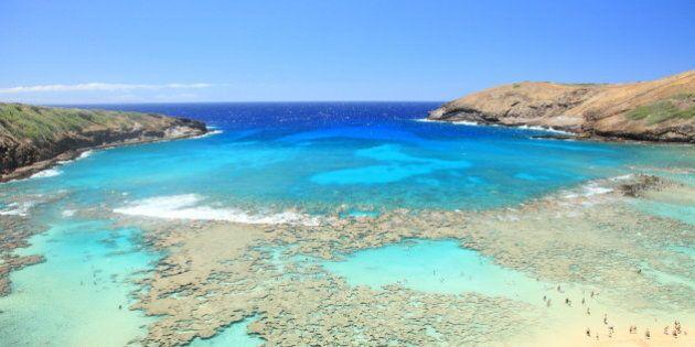 L'acidification des océans est responsable de la plus grande extinction