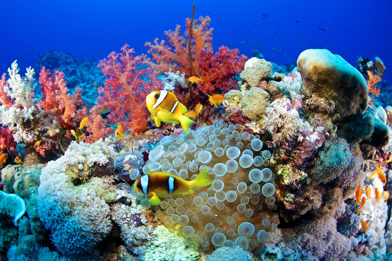 Coral reefs have among the highest levels of biodiversity of any ecosystem on the planet, and they also function as natural barriers against storms.
