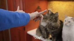 Le langage des signes permet à ce chat sourd d'interagir avec les