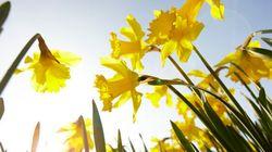 Découvrez pourquoi le printemps est plus court de 30 secondes chaque