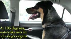 Ces vidéos vous dissuaderont de laisser votre chien dans la voiture au