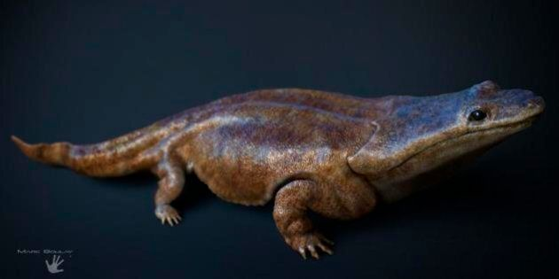 Une salamandre géante qui terrorisait la planète il y a 200 millions d'années a été découverte