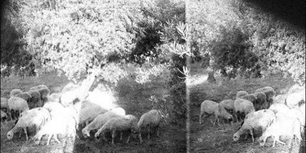 «Asunder, Sweet And Other Distress» de Godspeed You! Black Emperor en écoute sur The