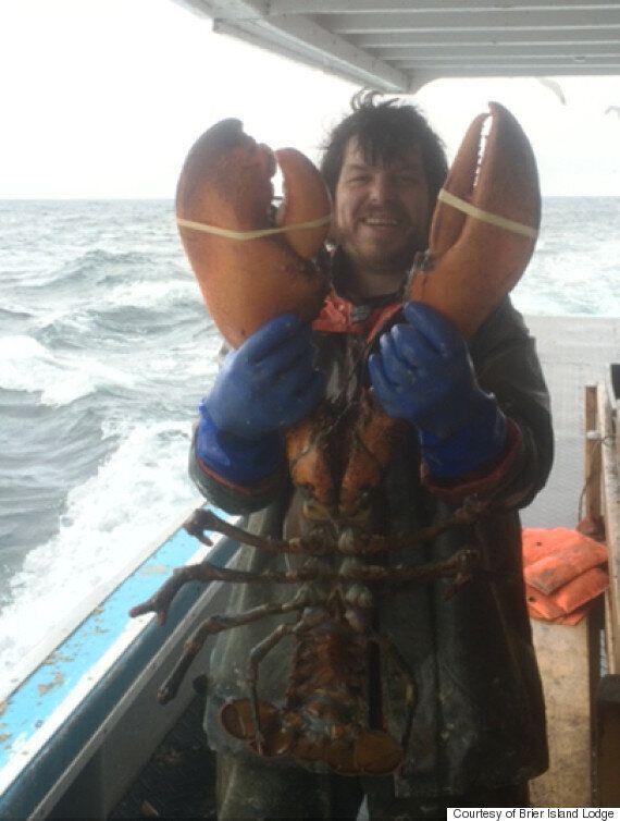 Un pêcheur attrape un homard géant de 7,7 kilos en