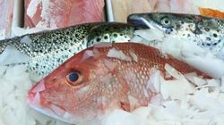 Importation de poisson: le permis de Costco