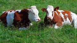 Quand un radar militaire suisse prend les vaches pour des avions
